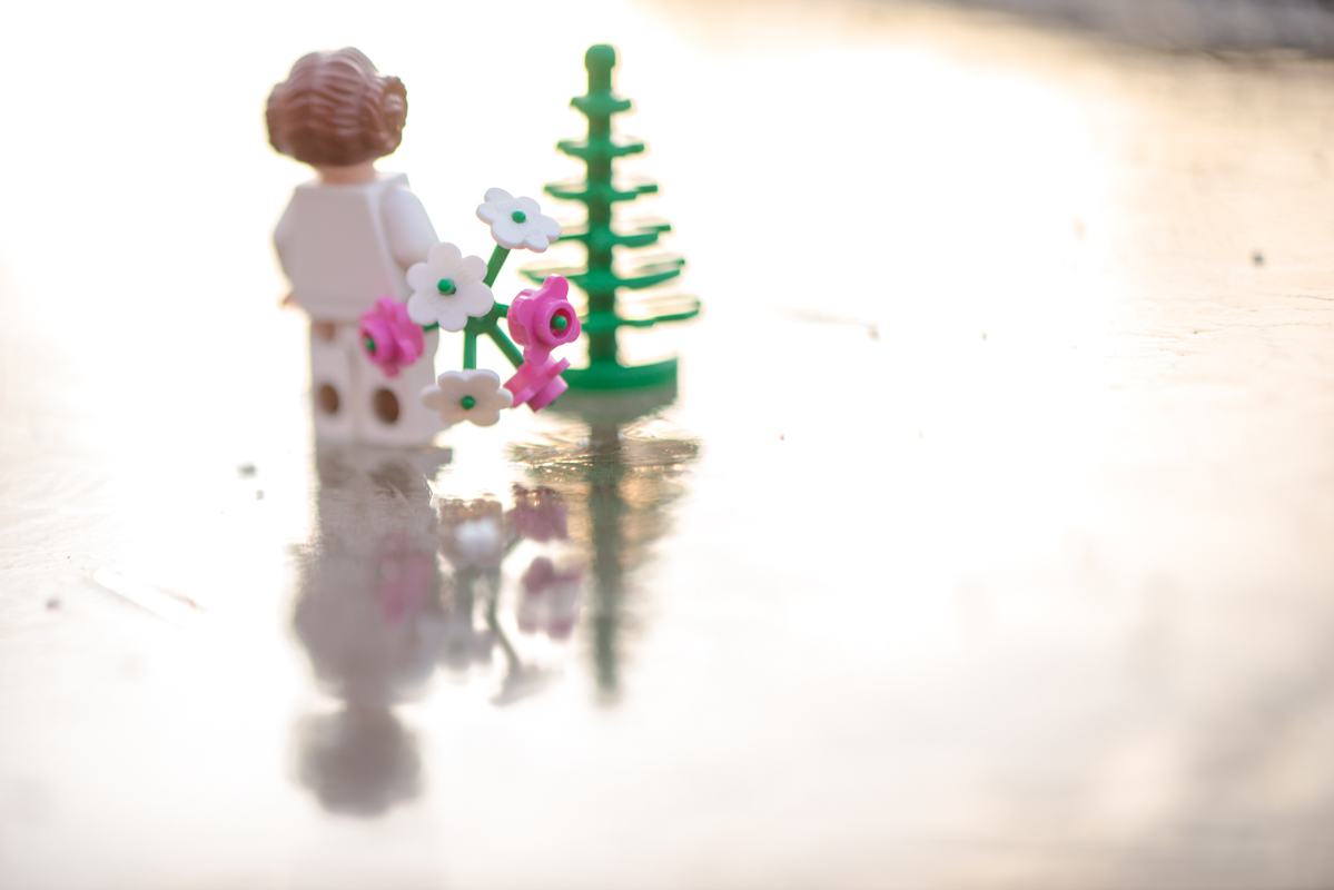Merry Christmas – a reflection of a toy 51/52